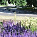 01 Lavender On The Campus by Sue Ould