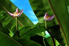 花卉及樹木 2020 (B)