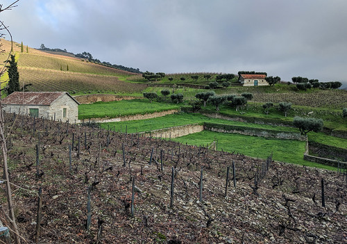 Quinta da Roeda vineyards
