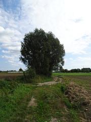 Merris 2020 (3) - Photo of Calonne-sur-la-Lys