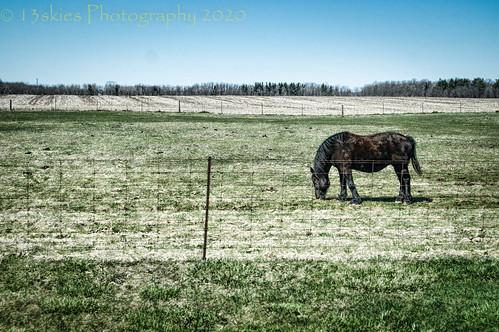 Green Pastures (HFF)