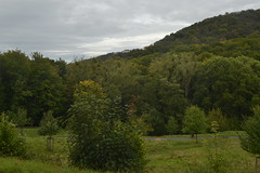 Blick auf Wald und Petersberg (137FJAKA_4424)