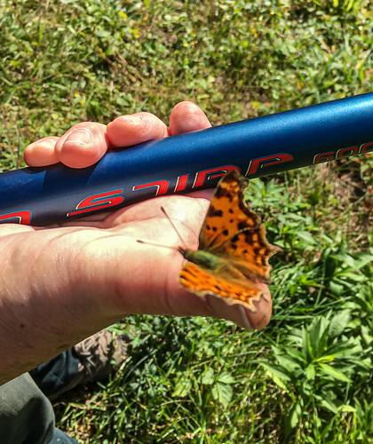 Schlechtes Bild - wer kennt den Schmetterling ...