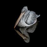 Pelican Lake by Richard John White