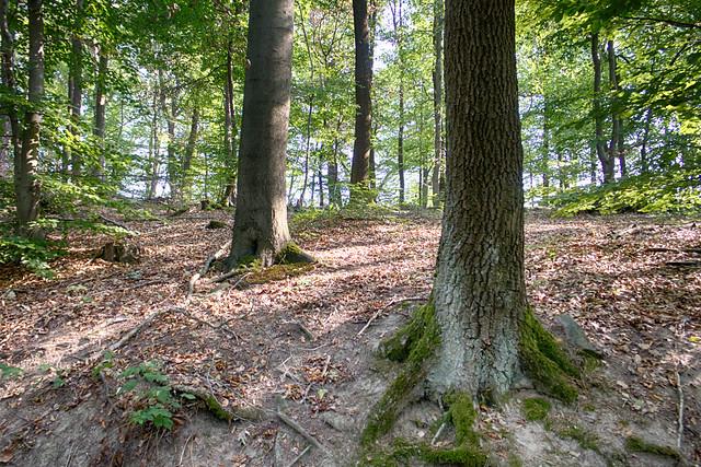 Photo:Unterwegs im Stadtwald Koblenz By jodage