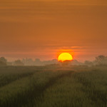 Welham Green Sunrise by Phil Luck