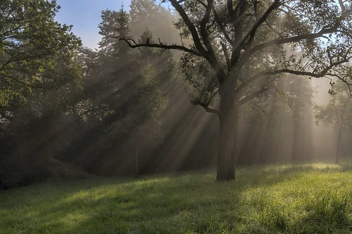 *September morning in an orchard meadow*