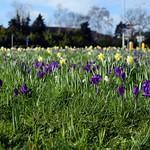 Spring at Mundells by Nina Harrup