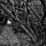 Escape from Fangorn by Henry Brzeski