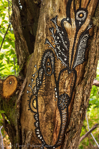 Great drawing on tree bark in Bars, Dordogne