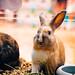 181104_4332 怎麼可以吃兔兔