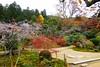 Photo:Jikko-in, Keishin-en (Garden) -9 (November 2018) By Tetsuhiro Terada