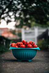 Tomatoes in a blue bowl on a concrete walkway