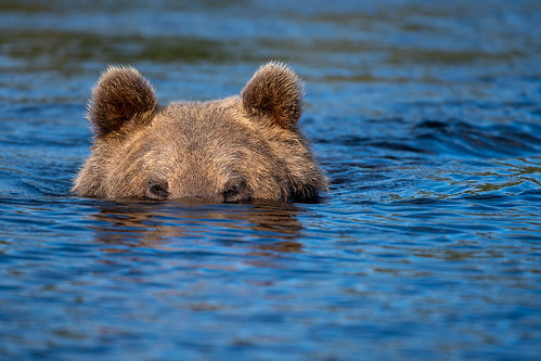 Bear Submarine