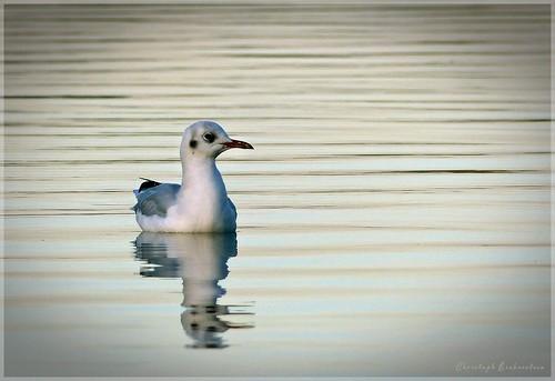 Vogelparadies Süßer See