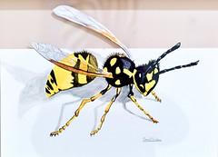 The Wasp - Samuel Simões