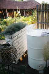 Decorative barrel and plants in the backyard.