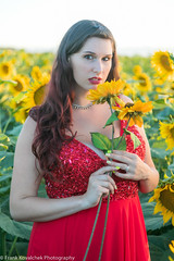 Photo Shoot - Challis in the Sunflower Fields