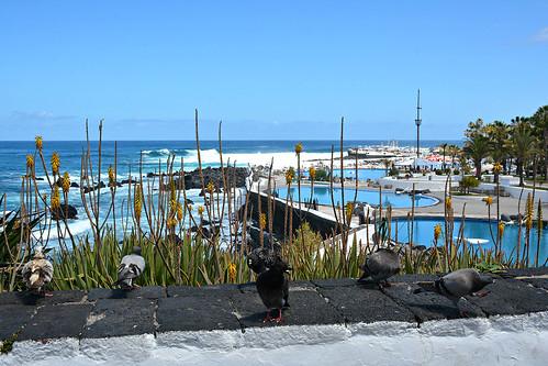 Tenerife 31