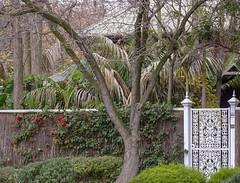 Beautiful Old Adelaide Front Garden Scene
