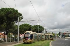 Alstom Citadis 302 n°2041  -  Montpellier, TaM