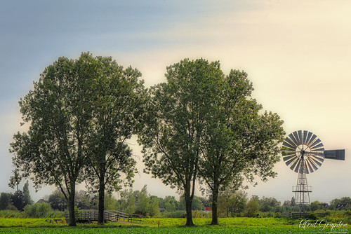 Stillife Of Four Trees And A Windmill
