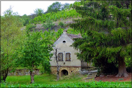 Weinberghütte im Rösebachtal