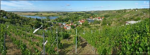Schönste Weinsicht 2016 (Weinbauregion Höhnstedt, Mansfelder Seen)