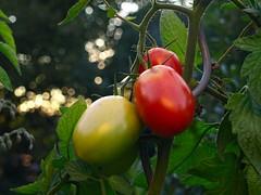 Home garden bokeh | September 18, 2020 | In the district of Segeberg - Schleswig-Holstein - Germany