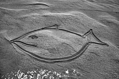 Desert Sand Fish