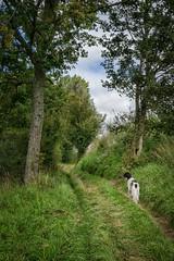 Path -Teneur, Pas de Calais - Photo of Fleury