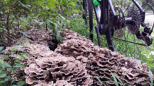 2020 Bike 180: Day 110 - Bracket Fungi
