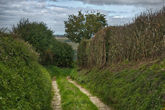 Path - Anvin, Pas de Calais - Photo of Guinecourt