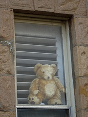 COVID Bear in a Shuttered Window