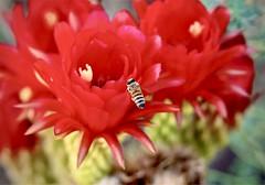 Happy honey bee