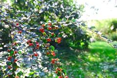 Home garden bokeh | September 14, 2020 | Schleswig-Holstein - Germany
