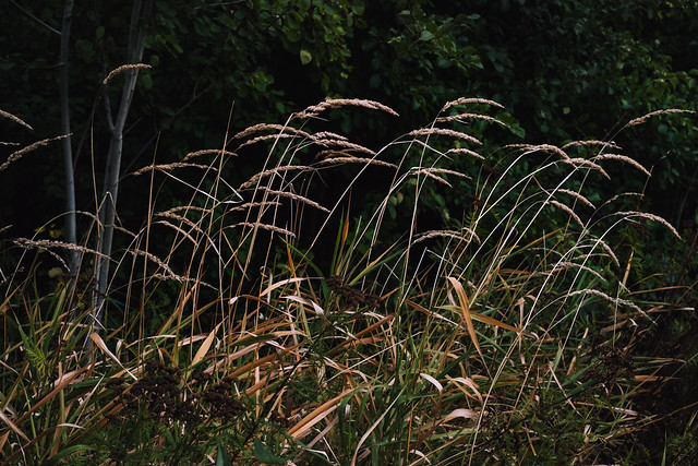 Photo:Early Fall Grass By jkrumm