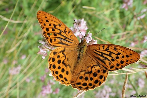 Butterfly 2061