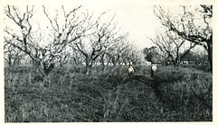 [CALIFORNIA-J-0009] California orchard