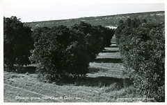 [CALIFORNIA-J-0001] Oroville orange grove