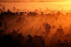 Sunrise above The Great Ķemeri Bog, Latvia