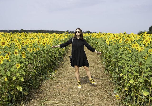 Feild of Sunflowers
