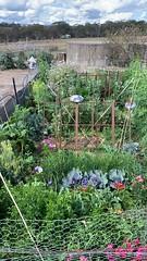 veg garden sept.