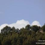 Aves en las lagunas de La Guardia (Toledo) 20-9-2020