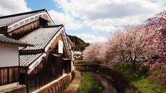 blooming Sake brewery