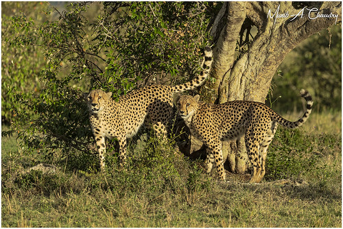 Scent Marking at Sunset!