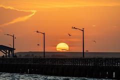 Ballast Point Sun