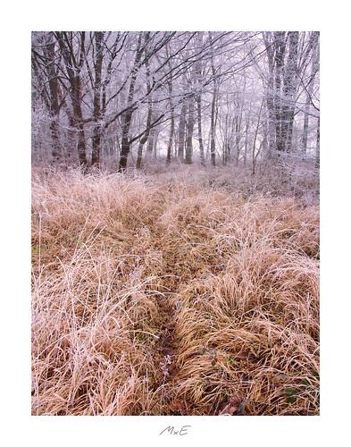 Frozen Wood