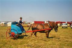 Heavy Horses hay making