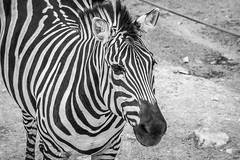 Zoo Pics-20